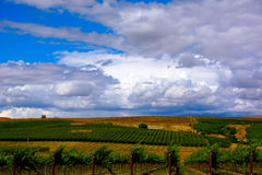 Wine country vineyard landscape. Driving through Yakima Valley wine country WA state. Pulled off road for this landscape photo opportunity Royalty Free Stock Images