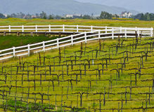 wine för vingård för Kalifornien land sydlig Royaltyfria Bilder
