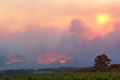 Wine farm close to forest fire Stock Images