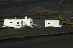 Wine Farm in Lanzarote Stock Images