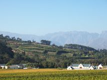 Wine farm Stellenbosch cape town Royalty Free Stock Photos