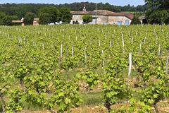 Wine farm and vineyard in rural landscape, France Royalty Free Stock Image