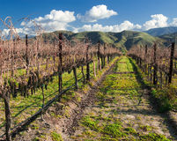 Wine Fields Royalty Free Stock Photo