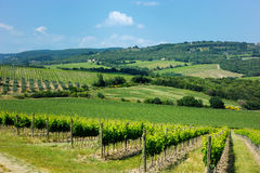 Wine fields Royalty Free Stock Photography