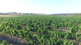Wine fields in the countryside from Portugal stock video