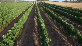 Wine fields in the countryside from Portugal stock video footage