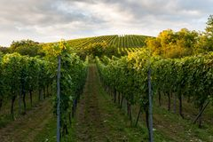 Wine fields in stuttgart germany Stock Images
