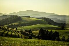 Wine fields Stock Photo