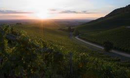 Wine-gård royaltyfria foton