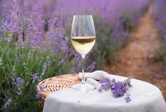 Wine glass against lavender. Landscape in sunset rays stock photo