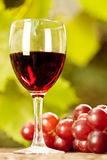 Wine glass and bunch of grapes. Red wine glass and bunch of grapes against vineyard in summer royalty free stock photo