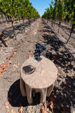Wine glass with a bunch of grapes on table in vineyard Royalty Free Stock Images