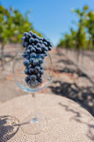 Wine glass with a bunch of grapes on table in vineyard Stock Photo
