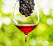 Wine glass with grape on wooden table Royalty Free Stock Photography