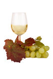 Wine, glass and grapes. In front of white background royalty free stock photos