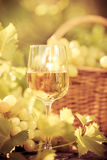 Wine glass and grapes of vine Stock Photography