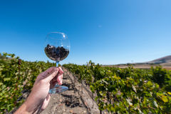 Wine glass with red wine grapes held in a hand Royalty Free Stock Images