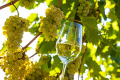 Wine glass in the vineyard Stock Photos