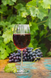 Wine glass wirh red wine, outdoor terrace, wine tasting in sunny. Wine glass with red wine, outdoor terrace, wine tasting in sunny day, green vineyard garden stock image