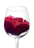 Wine glasses and flower. Wine glass in backlight with red flower Stock Photos