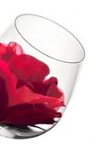 Wine glasses and flower. Wine glass in backlight with red flower Stock Images