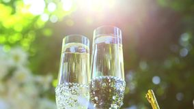 Wine glasses on the grass with green background stock video footage