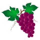 Wine grape Royalty Free Stock Image