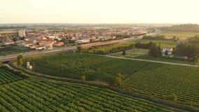 Wine grape aerial nature sun. Aerial flight over Italian town country village nature grape wine stock video footage