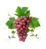 Wine grape cluster