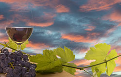 Wine, grape and grapevine at sunset. Still life of wine, grape, and grapevine on wood table at sunset, wine making concept royalty free stock photography