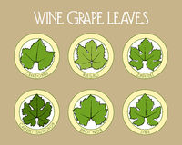 Wine grape leaves badges Royalty Free Stock Photography