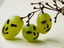 Funny faces on grapes. Wine grape with many expressions Royalty Free Stock Images