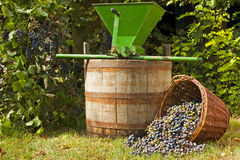 Wine grape still life Royalty Free Stock Images