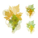 Wine grape. Vector illustration of wine grape Stock Images