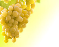 wine grapes Royalty Free Stock Photos