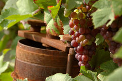 Wine grapes. And a rusty old winepress Stock Photography