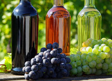 Wine and grapes. 3 different wine bottles with red wine and white wine grapes in the foreground - vineyard in the background royalty free stock photos