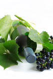 Wine and grapes Stock Image