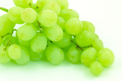 Wine grapes. Bouquet of green wine grapes stock images
