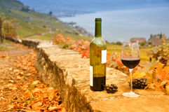 Wine and grapes against Geneva lake. Lavaux region, Switzerland Royalty Free Stock Photography