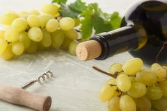 Wine grapes and wine. stock photography
