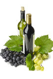 Wine and grapes. Stock Photography