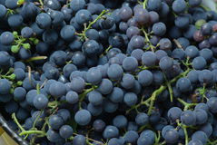 Wine grapes in bucket Stock Photos