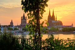 Wine grapes and Cologne Dome at Sunset Stock Image