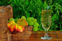 Wine and grapes in a garden Royalty Free Stock Photo