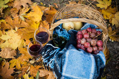 Wine, grapes and glasses. Basket with a blanket, wine, grapes and glasses on yellow autumn leaves. A cozy autumn picnic in the park, a warm autumn day Royalty Free Stock Photography