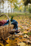 Wine, grapes and glasses. Basket with a blanket, wine, grapes and glasses on yellow autumn leaves. A cozy autumn picnic in the park, a warm autumn day Royalty Free Stock Image