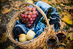 Wine, grapes and glasses. Basket with a blanket, wine, grapes and glasses on yellow autumn leaves. A cozy autumn picnic in the park, a warm autumn day Stock Images