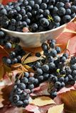 wine grapes after harvest Royalty Free Stock Photo