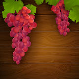 Wine Grapes. Illustration of Wine Grapes with Leaves Royalty Free Stock Photos